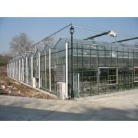 文洛式三尖顶4mm浮法玻璃