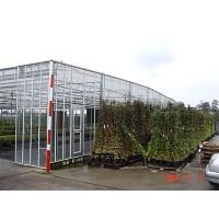 屋顶平拉膜温室