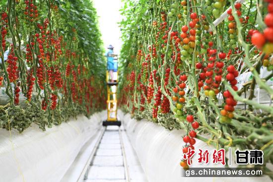 张掖与海升集团、甘肃建投总公司签约 打造生态型产业2