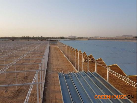 沙特阿拉伯的番茄温室综合设施 440