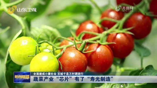 蔬菜产业的 寿光模式1