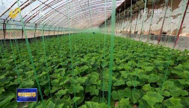 蔬菜产业的 寿光模式3