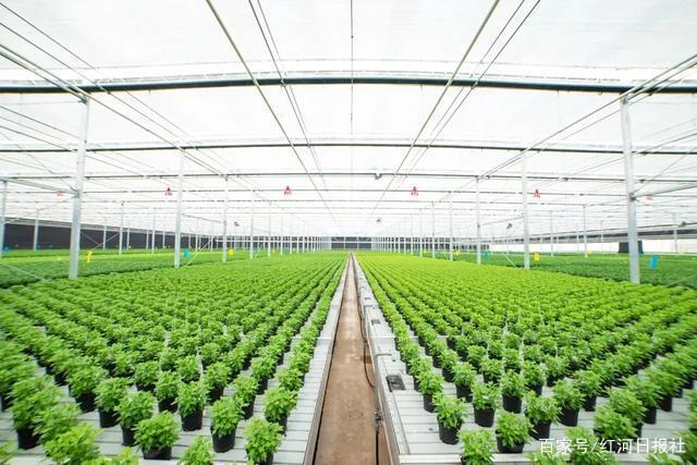 云南省开远农业科技园区