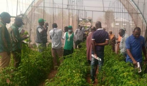 加纳呼吁公众采购温室蔬菜